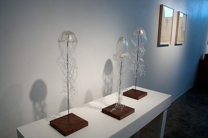 Jellyfish, 2011 installation view