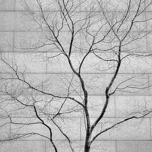 Tree and Wall gelatin silver print