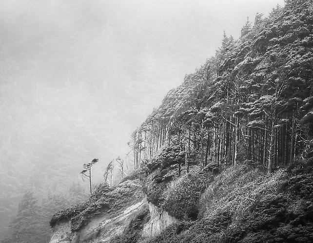 Windswept Trees, Pacific Coast gelatin silver print