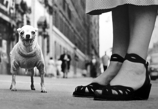 New York [Dog & Sandals] 1946 gelatin silver print