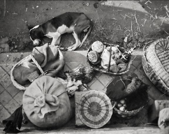 Sleepy dog 1931 printed later gelatin silver print
