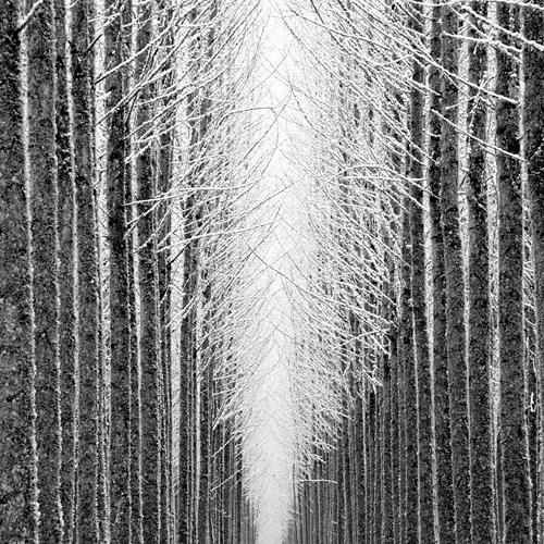 Tree Cathedral 2007 gelatin silver print