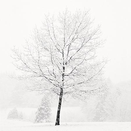 Lone Tree in Snow 2007 gelatin silver print