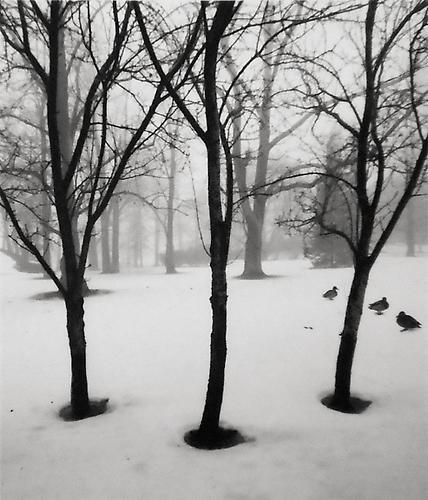 Helsinki, Finland (Three Trees, Three Ducks) 1996 Gelatin Silver Print