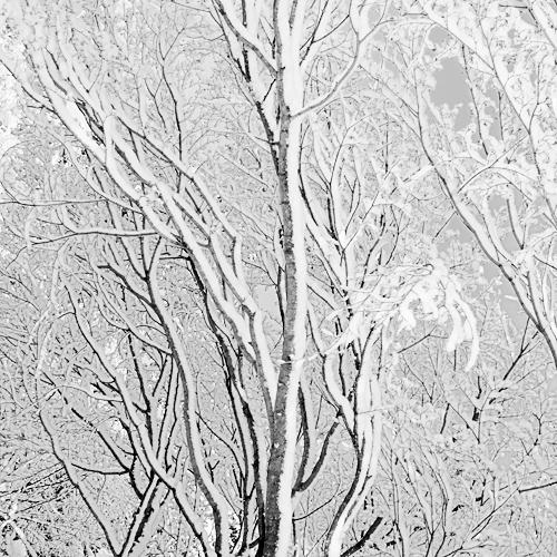 Snow Layers 2008 gelatin silver print