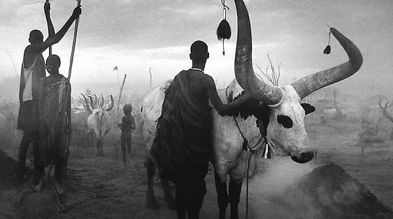 Sebastião Salgado | Project Room