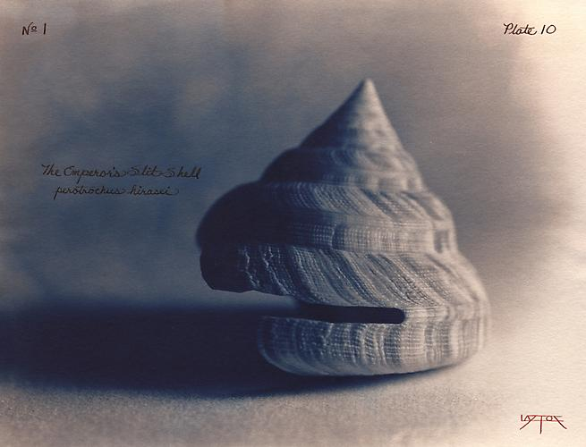 Emperor's Slit Shell  2002 toned cyanotype with hand coloring