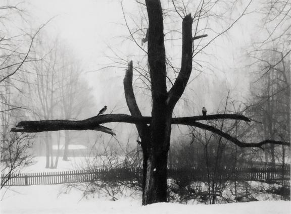 Helsinki, Finland [2 birds on branch] 2002 gelatin silver print