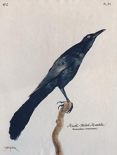 Great-Tailed Grackle 2003 toned cyanotype with hand coloring
