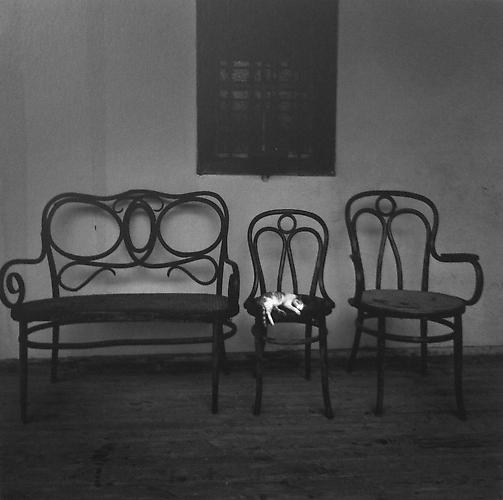 Untitled (Cat & Three Chairs) 2006 Gelatin Silver Print