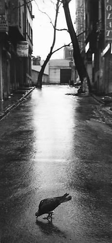 Untitled, (Bind in the Middle of the Street) 1996 gelatin silver print