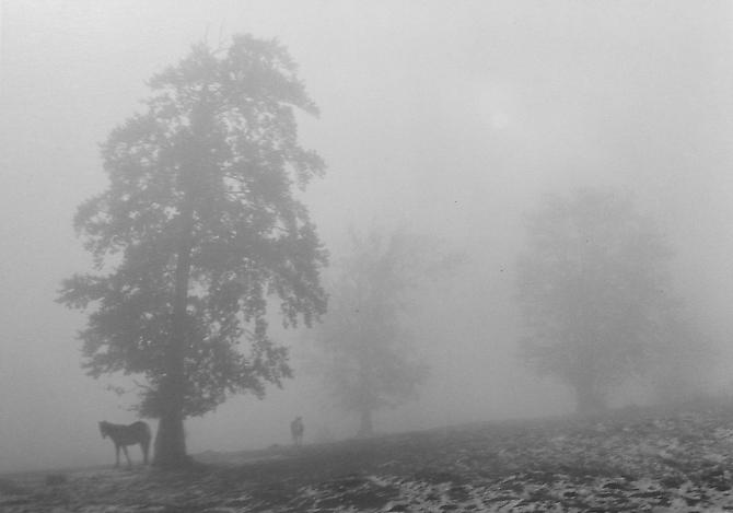Untitled (Two Horses, Trees in Fog) 2003 Gelatin Silver Print