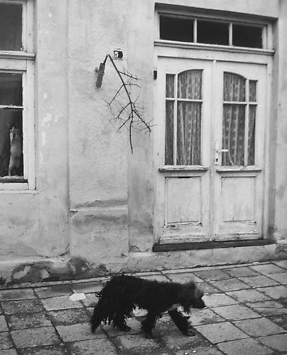 Untitled, (Dog walking down tiled road) 2003 gelatin silver print