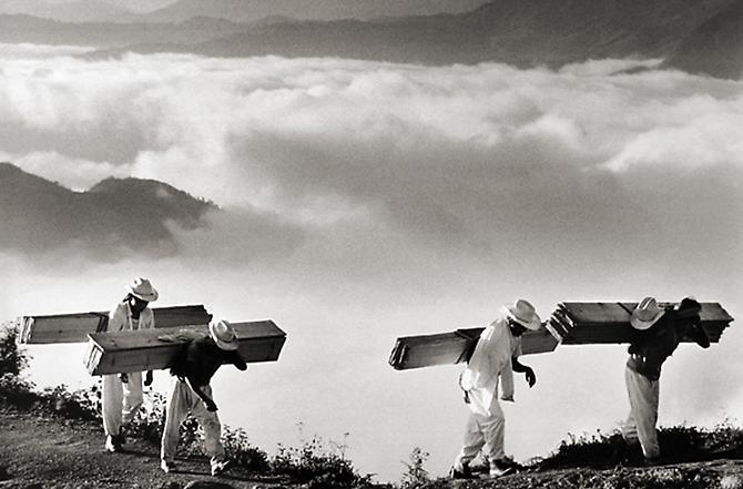 Wood Delivery Men, Eastern Sierra Madre, Vicinity of Huautla de Jiménez, Mexico 1980 Gelatin Silver Print