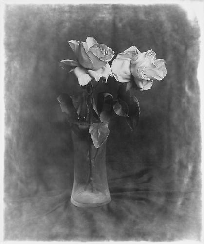 Two flowers in Jar 2012 gelatin silver print