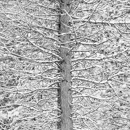 Tree and Snow Mosaic gelatin silver print