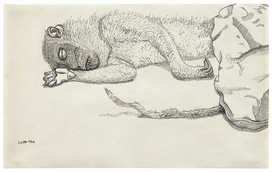 "Lucian Freud, ""Dead Monkey"" 1944 Ink on paper, 7 7/8 x 12 3/4 in. (20 x 32.5 cm) Private Collection © The Lucian Freud Archive  Photo © The Lucian Freud Archive"