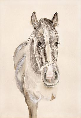 "Lucian Freud, ""A Filly"" 1969 Pencil and watercolor on paper 13 5/8 x 9 1/2 inches (34.5 x 24 cm) Private Collection © The Lucian Freud Archive Photo © Lucian Freud Archive Image"