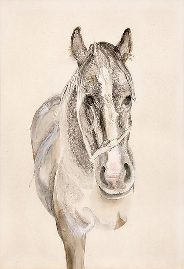 "Lucian Freud, ""A Filly"" 1969 Pencil and watercolor on paper 13 5/8 x 9 1/2 inches (34.5 x 24 cm) Private Collection © The Lucian Freud Archive Photo © Lucian Freud Archive"