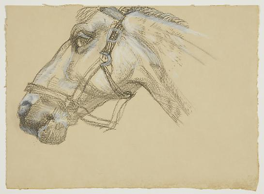 "Lucian Freud, ""Head of Success II"" 1983 Charcoal and crayon on paper 9 1/2 x 13 1/4 inches (24.1 x 33.7 cm) Acquavella Galleries © The Lucian Freud Archive Image"