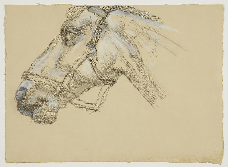 "Lucian Freud, ""Head of Success II"" 1983 Charcoal and crayon on paper 9 1/2 x 13 1/4 inches (24.1 x 33.7 cm) Acquavella Galleries © The Lucian Freud Archive"