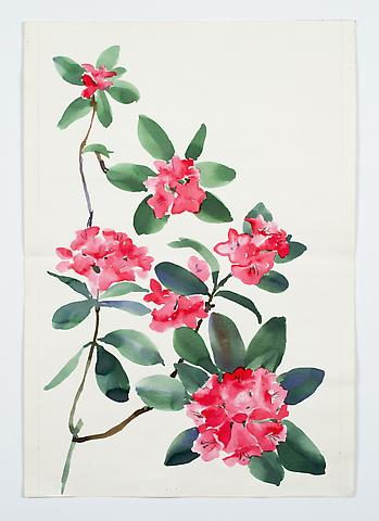 "Rhododendron, from the ""Florals"" series (c.1984) Watercolor on paper 17.5h x 12w in (44.5h x 30.5w cm)"