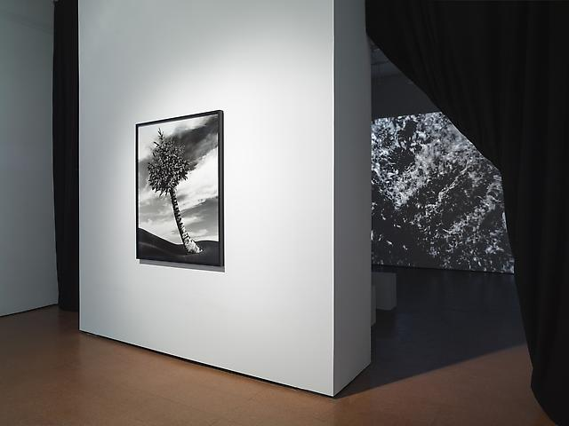 Lorraine O'Grady, New Worlds Foreground: The Fir-Palm (1991/2012) Background: Landscape (Western Hemisphere) (2011) Installation view Alexander Gray Associates (2012)