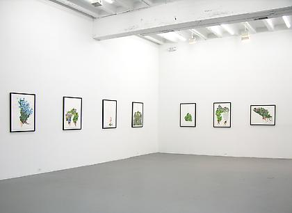 ZOË CHARLTON festoon 2013, installation view, CONNERSMITH.