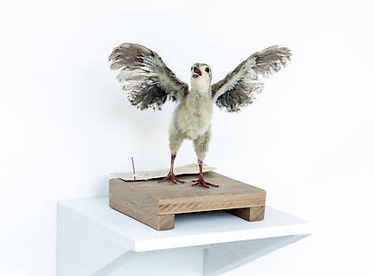 KOEN VANMECHELEN Leaving Paradise 2013, Taxidermied Red Jungle Fowl (chick), wood, 8 x 8 x 8 inches Unique
