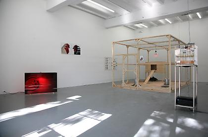 Koen Vanmechelen - Cosmopolitan Chicken Project DC installation view