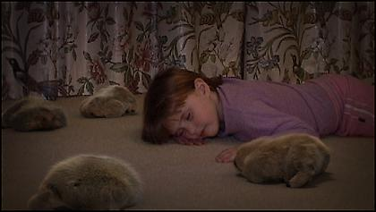 PATRICIA PICCININI The Gathering 2007, single channel video, 3 minutes 31 seconds