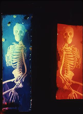 Life Never Dies: Blue and Red Skeleton