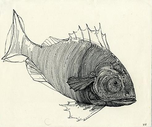 Kristofer Porter Fish, 2010 ink on paper 8 x 9.75 inches