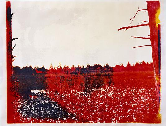 Matthew Brandt Dead Lake OR 6, 2008 Chromogenic print soaked in Dead Lake water 30 x 40 inches Unique Photo