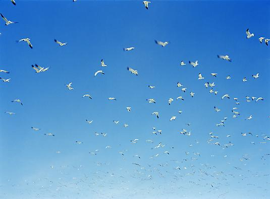 <i>Birds at the Landfill in New Jersey</i>,2012 Chromogenic Print