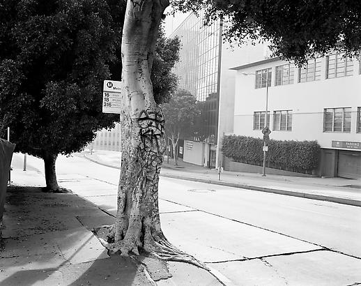 Peter Holzhauer Grafitti Tree, 2008 Chromogenic print 30 x 38 inches Edition of 6