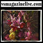 vsmagazinelive.com