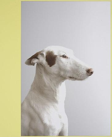 Podenco  2007 laminated digital ink-jet print mounted on aluminum, lacquered wood frame 48 x 39.5 x 1 in