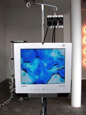 Vital Signs Installation view at Sandra Gering Gallery  2001