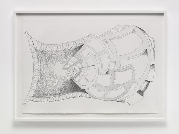 Constant Growth, 2014 Graphite on paper 30 x 44 inches SGI3277