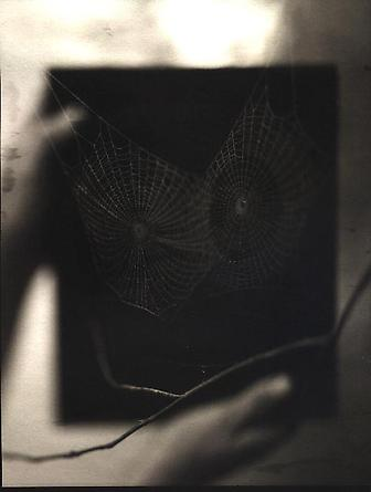 Two Spider Webs, 2000