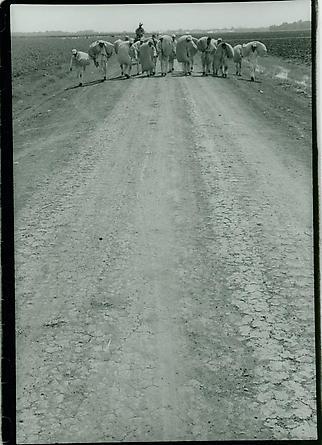 Texas Prison, 1968