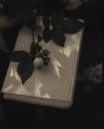 Rose, 1999