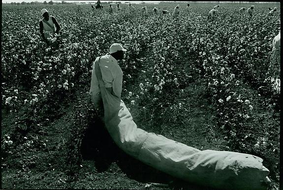 Convict with a Bag of Cotton, Texas, 1968