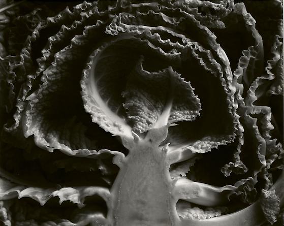 Kale, Halved, 1930