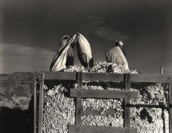 Men Emptying Cotton Bags