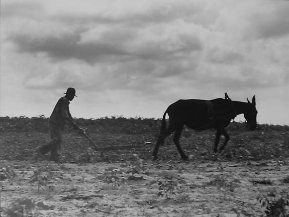 One Man, One Mule, Greene County, Georgia, 1937
