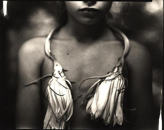Sally Mann Night Blooming Cereus, 1988