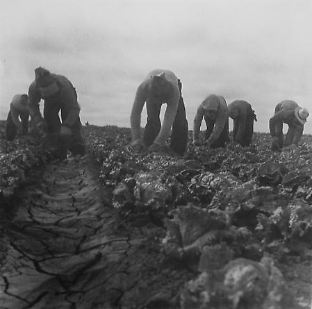 Six Cotton (Cabbage) Pickers
