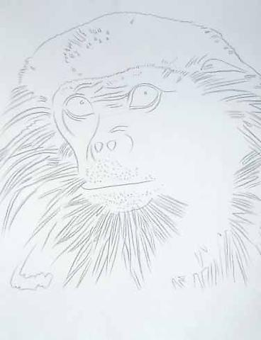 Vanishing Animals-Douc Langur, 1986 Graphite on HMP paper  31.5 x 23.75 inches